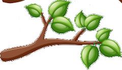 větve strom